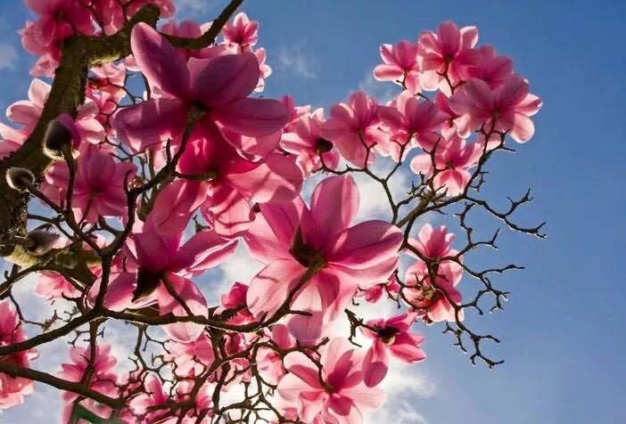 春天的旋律 ——写于学雷锋纪念日 文/她山玉(深圳)